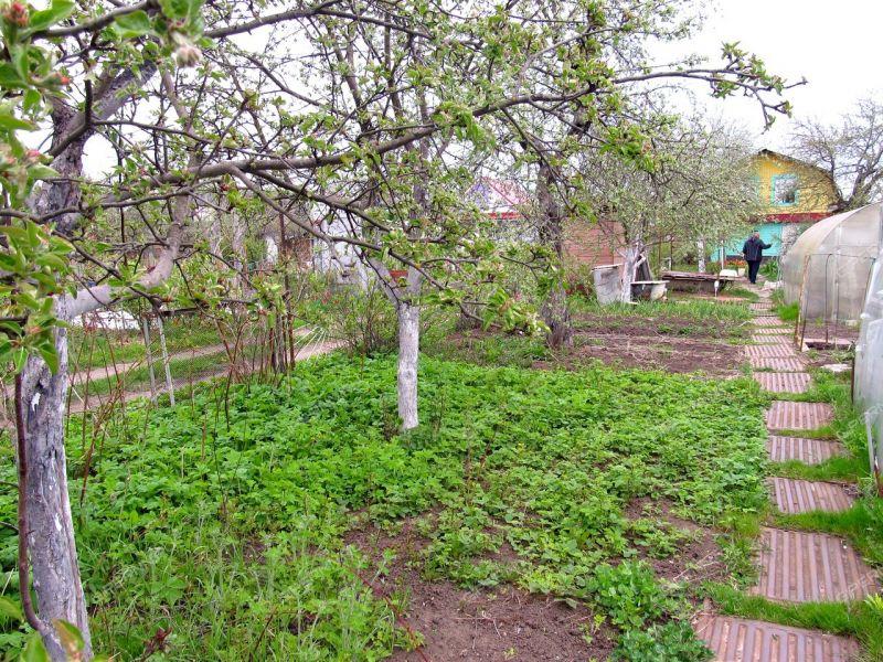 сад на улице Кима